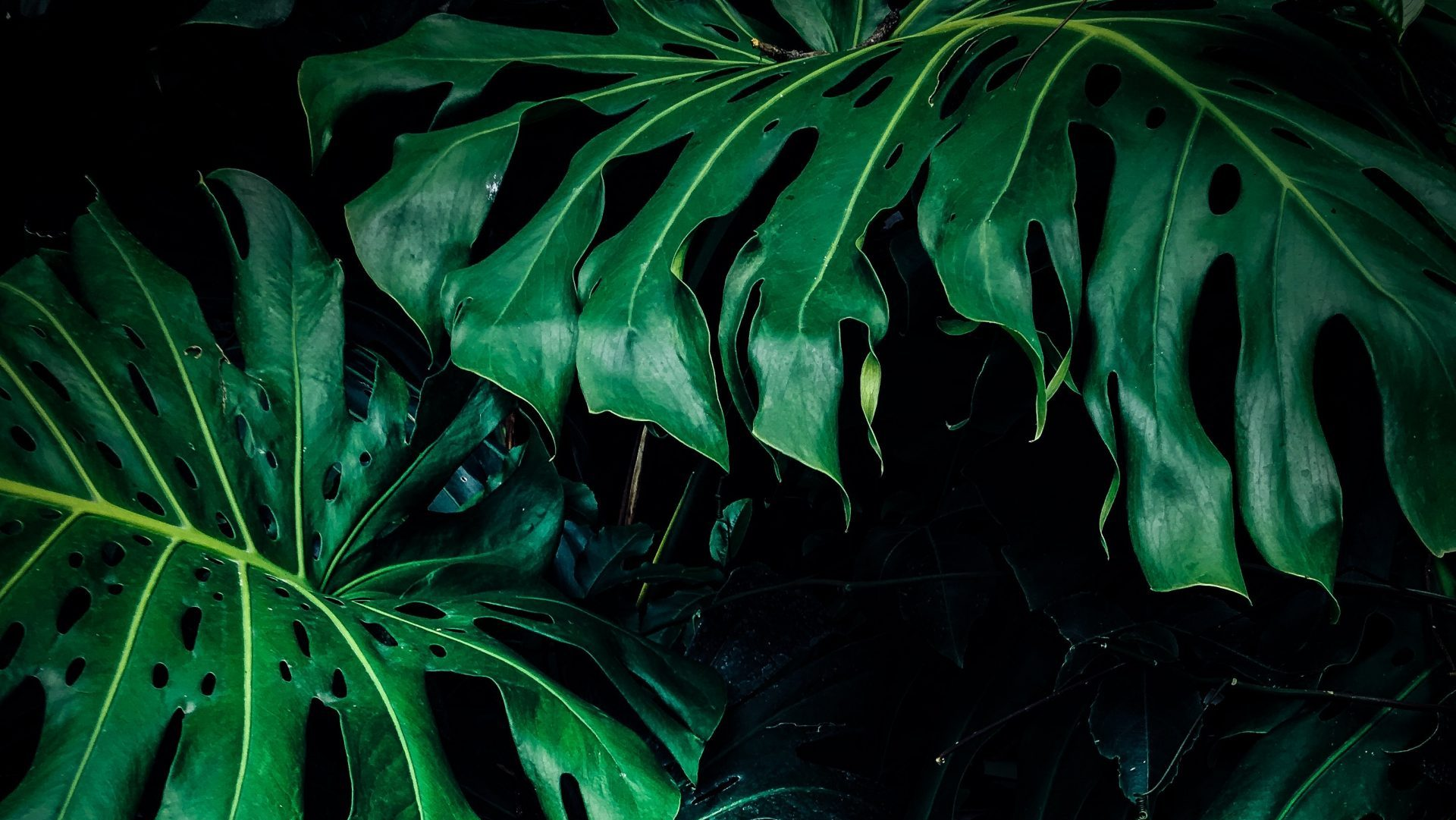 Article symbolique des couleurs : le vert